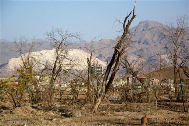یک حشره زندگی نیمی از مردم کرمان را تهدید می نماید