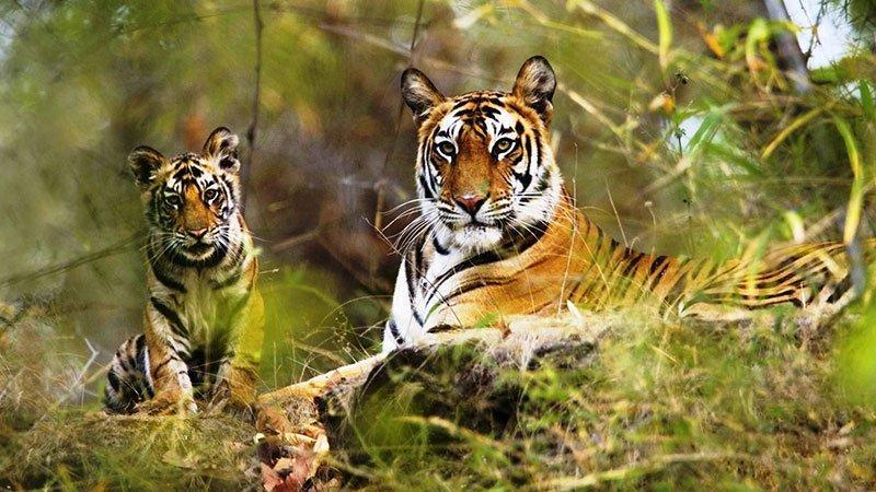 پارک ملی پریار در کرالای هند