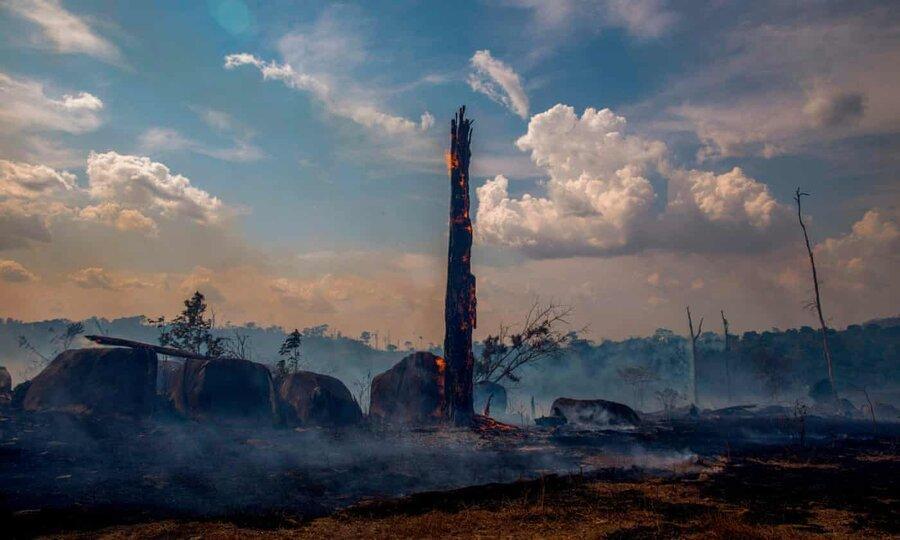 جنگل های بارانی آمازون به نقطه نابودی بی بازگشت نزدیک می شوند