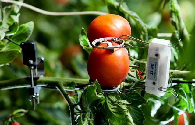 پای کشاورزی هوشمند در مازندران می لنگد!